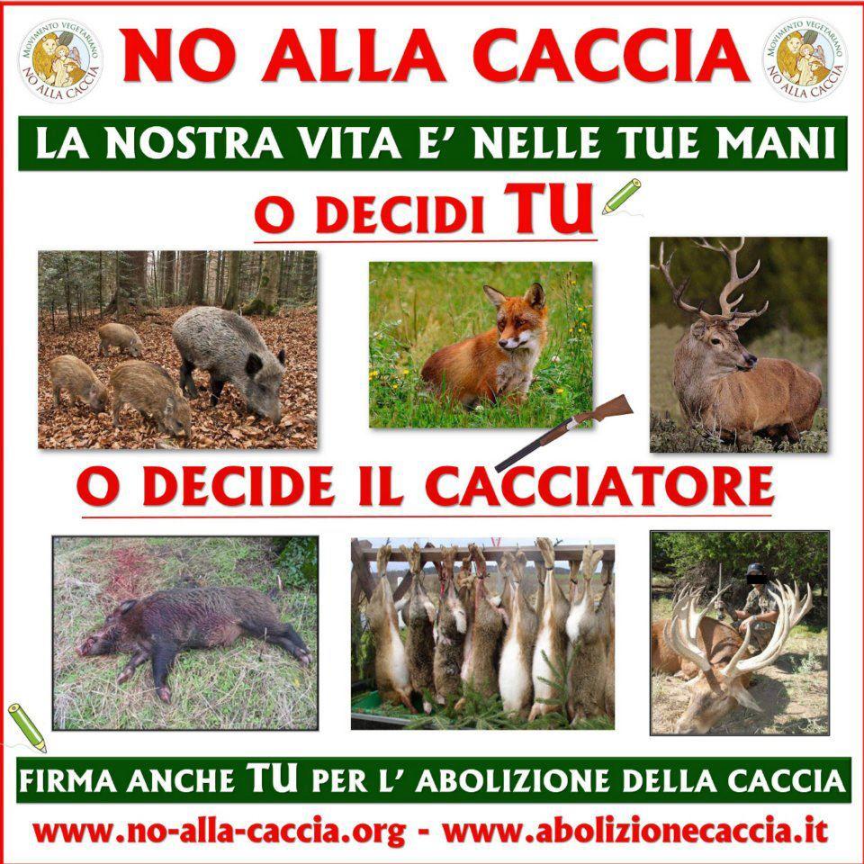no alla caccia | Think Green • Live Vegan • Love Animals