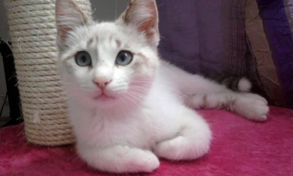 gattina cerca casa