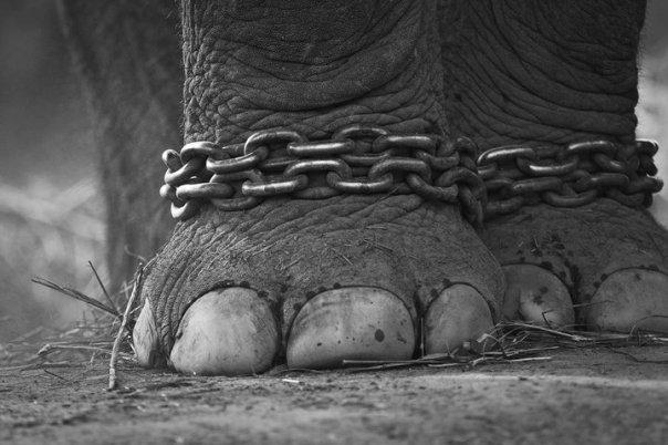 elefante catene