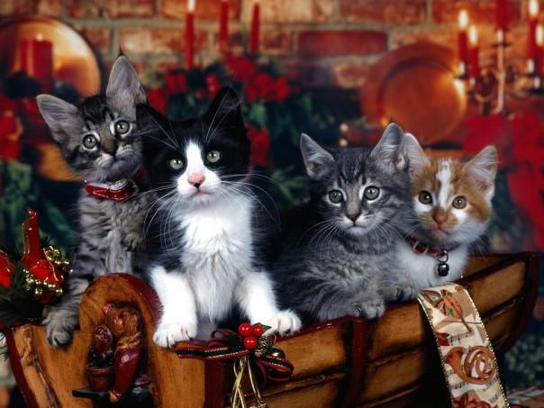 gatti in un cesto natalizio