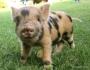 °° Settimana Mondiale per l'Abolizione della Carne: salva gli animali con 7 giorni vegani°°