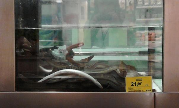 anguille morenti coop fucecchio