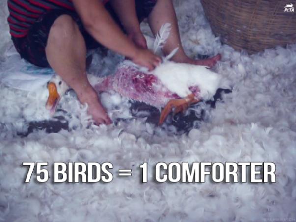 birdscomf