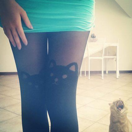 calze gatto