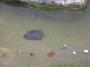 °° Bari : Animali Abbandonati Presi a Sassate Nel Parco 2 Giugno°°