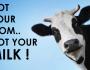 """°° Lettera agli Allevatori di Mucche : """" Cambiate Lavoro """"°°"""