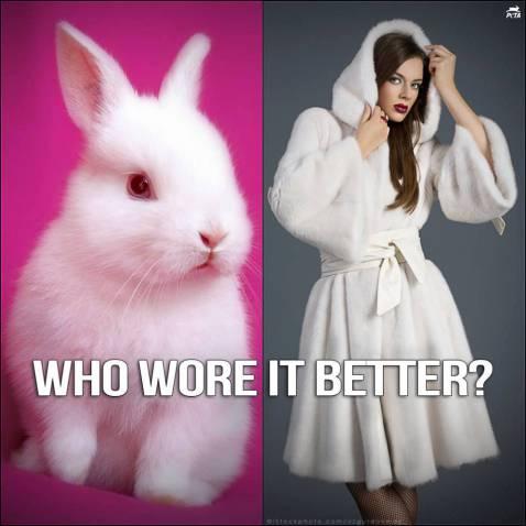 rabbits-and-fur