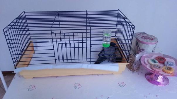 piccione 2
