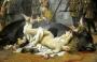 °° Woman Condition during Victorian Age & Animal Speciesism : due discriminazioni parallele nella Storia°°