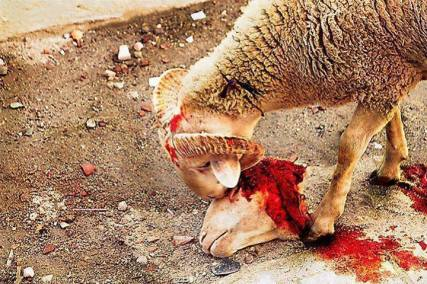 ANIMAL-CRUELTY-SHEEP.jpg
