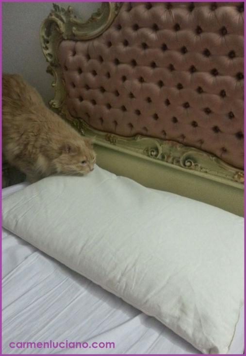 cuscino1.jpg