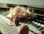 °° Lettera Aperta a Marina Ripa di Meana – Se Ami gli Animali non li Mangi°°