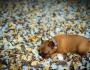 °° Clonazione dei Cani: La Nuova Frontiera dell'Egoismo Umano°°
