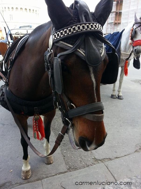 cavalli pisa 2