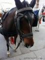°° Al Comune di Pisa: Abolire Subito lo Sfruttamento dei Cavalli°°