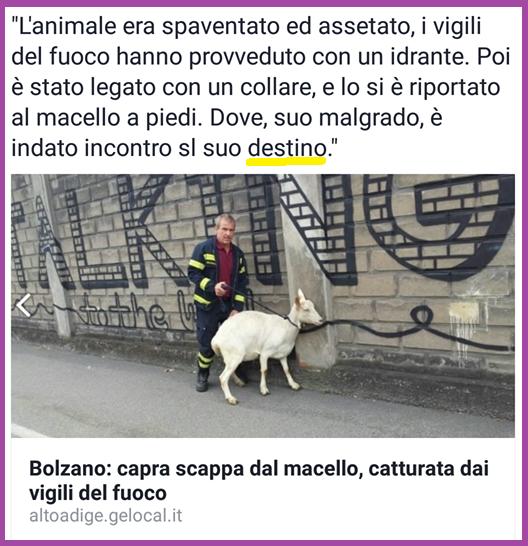 bolzano capra.png