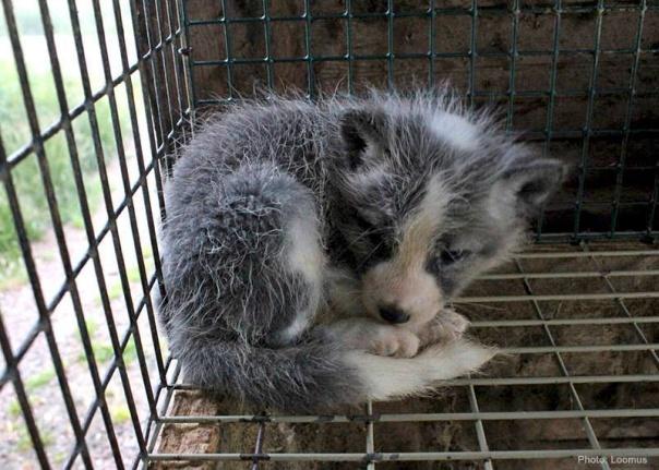 fur-farming-loomus.jpg