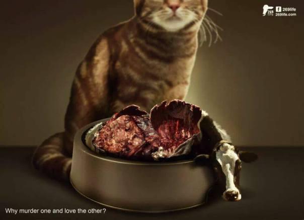 Alimenti Vegetali Per Cani Gatti Perché No Think Green
