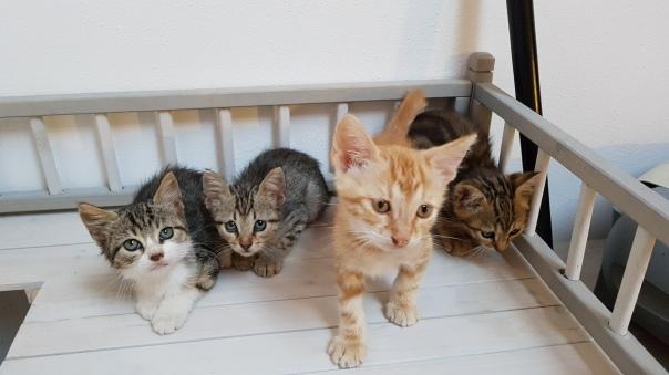 Pisa 4 Gattini Di Tre Mesi Cercano Adozione Think Green Live