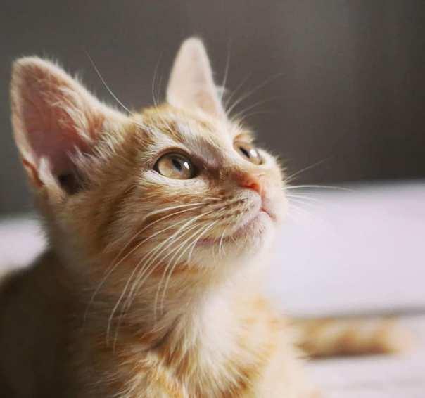 gattina rossa.jpg