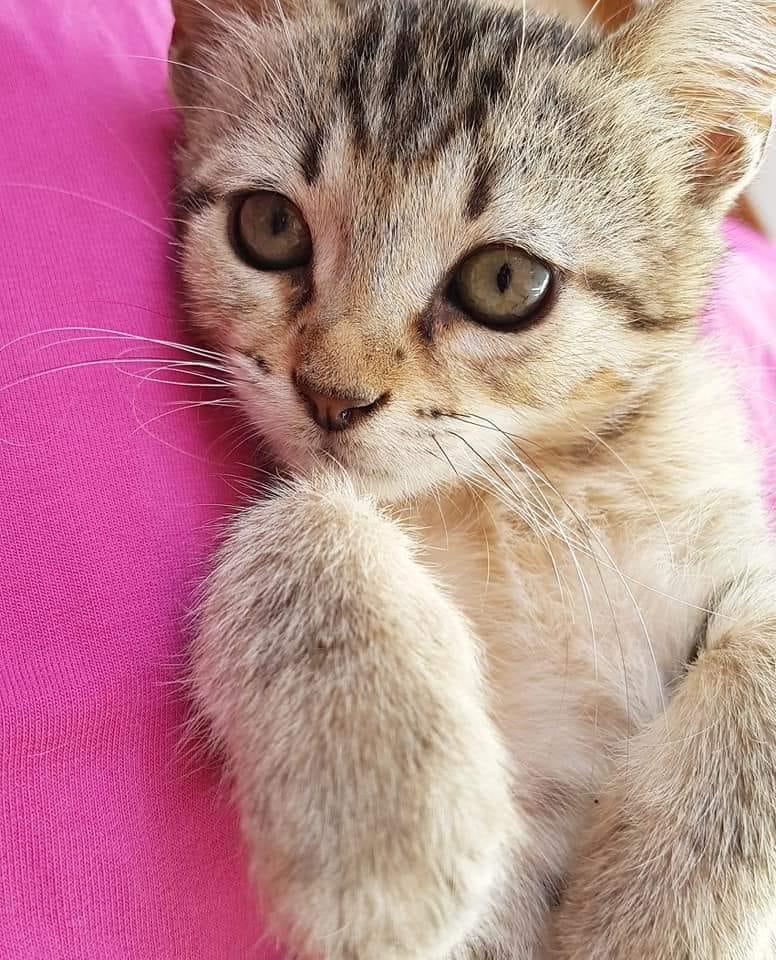 micio tigrato.jpg