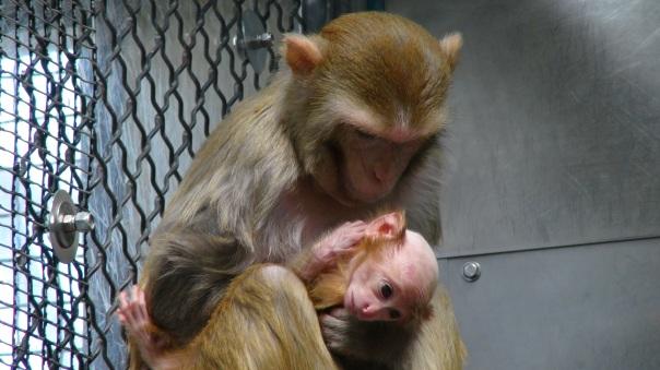 test primati.jpg