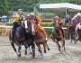 °°Morti Due Cavalli Durante le Prove del Palio diFucecchio°°